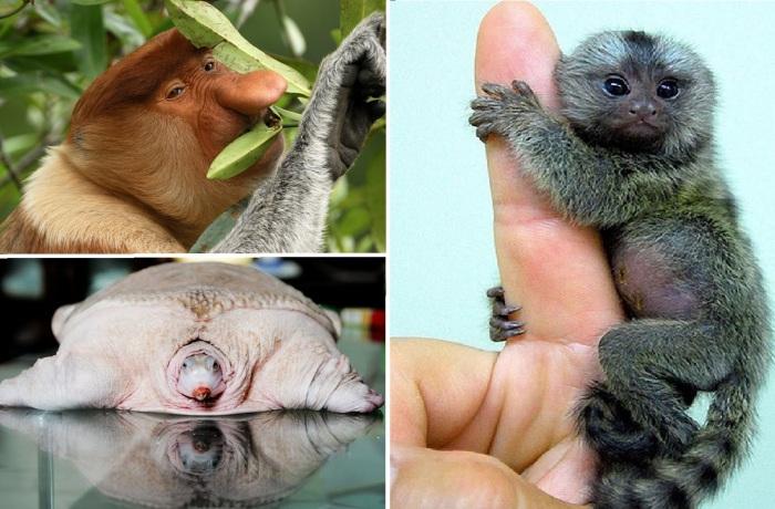 Необычные животные.