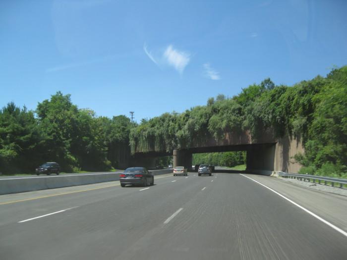 Восхитительный зеленый мост длядиких животных.