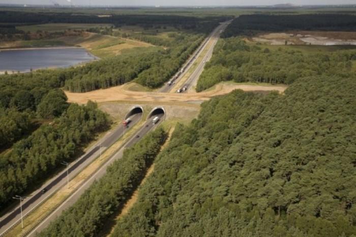 Впечатляющий мост дляживотных вБельгии.