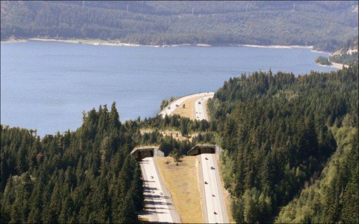 Зеленый мост, расположенный уозера вСША.