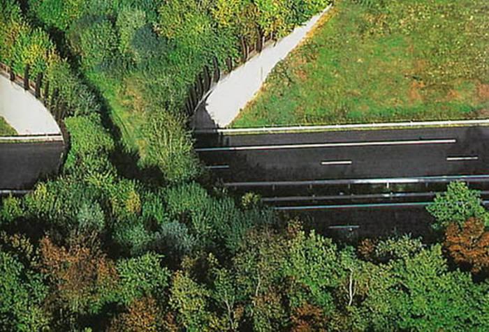 Озелененный мост длядиких животных воФранции.