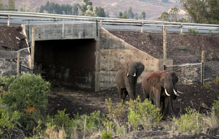 Подземный переход длядиких животных вКении.