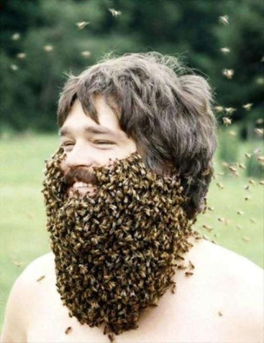 Если природа обделила густым волосяным покровом, можно сделать чудную бороду из пчел.