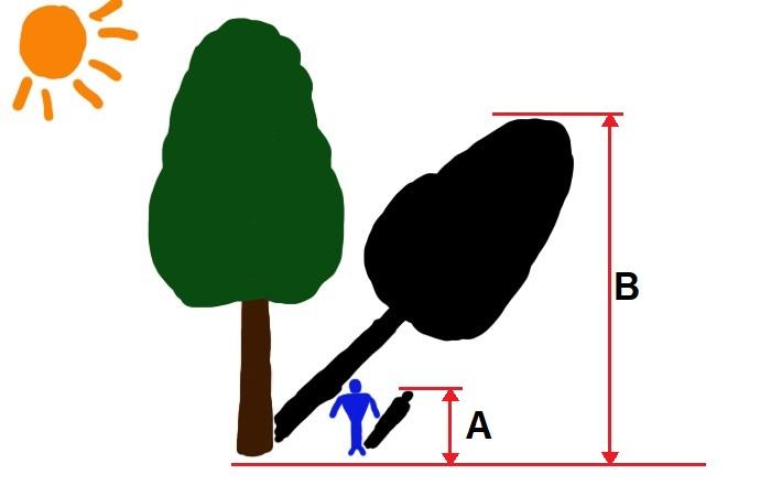 Используем тень и значение своего роста. ¦Фото: novate.ru.