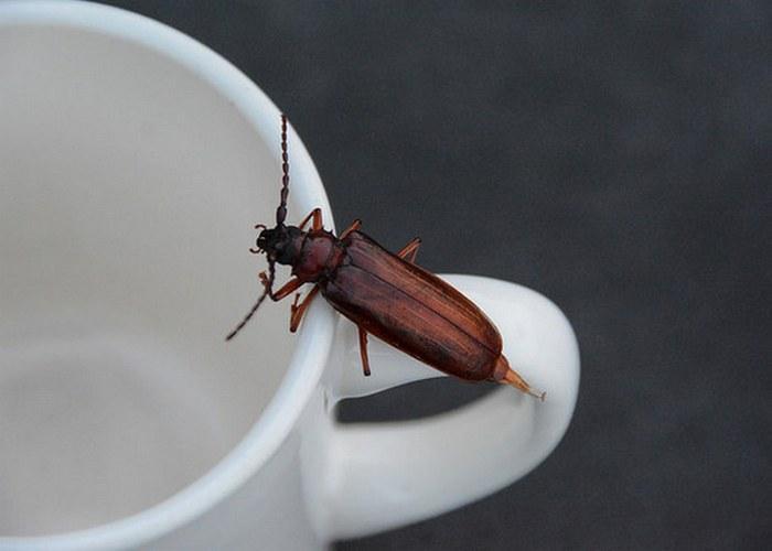 Кофейная гуща как приманка для тараканов.