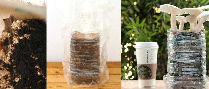 Кофейная гуща поможет выращивать грибы.