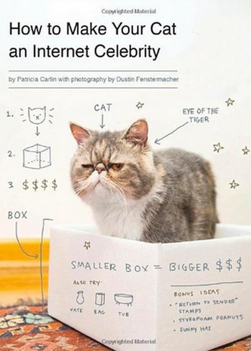 Как сделать своего кота интернет-знаменитостью.