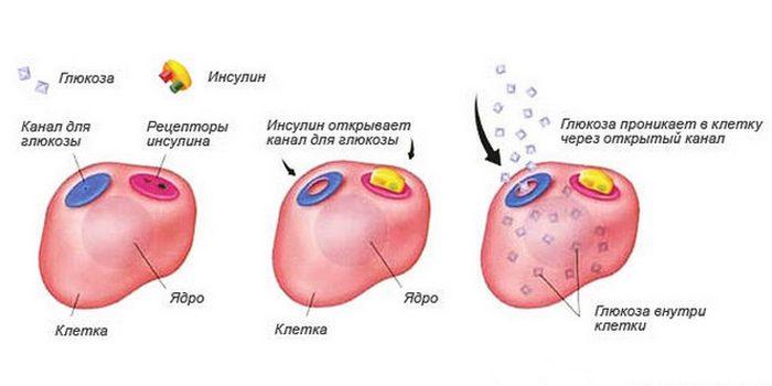 Польза голодания: улучшение чувствительности к инсулину.
