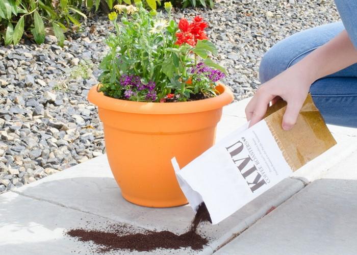 Кофейная гуща может отпугивать насекомых.