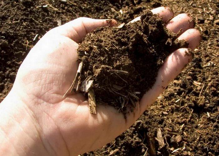 Кофейная гуща поможет создать насыщенный компост.