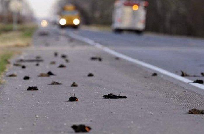 «Массовое самоубийство птиц» в Джатинге.