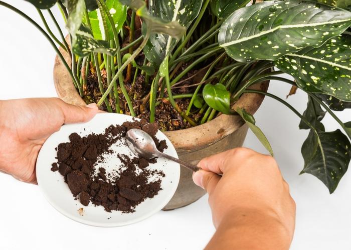 Кофейная гуща поможет удобрить растения.