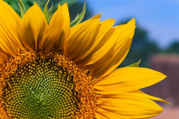 Почему цветы растут по всей планете