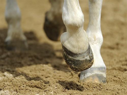 Опасайтесь лошади, бьющей копытом.