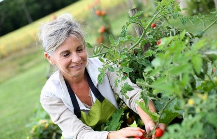 Садовник - одна из наиболее приятных форм физического труда.