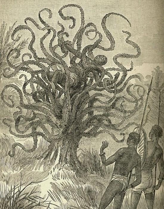 Растение-людоед из Мадагаскара.