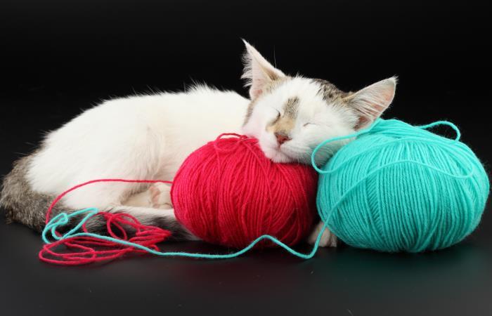 Аксессуары, которые сделают кота самым счастливым зверем на планете.