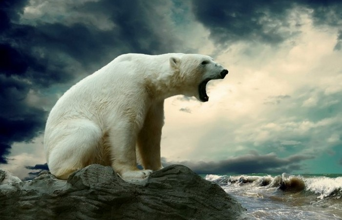 В Антарктиде нет полярных медведей.