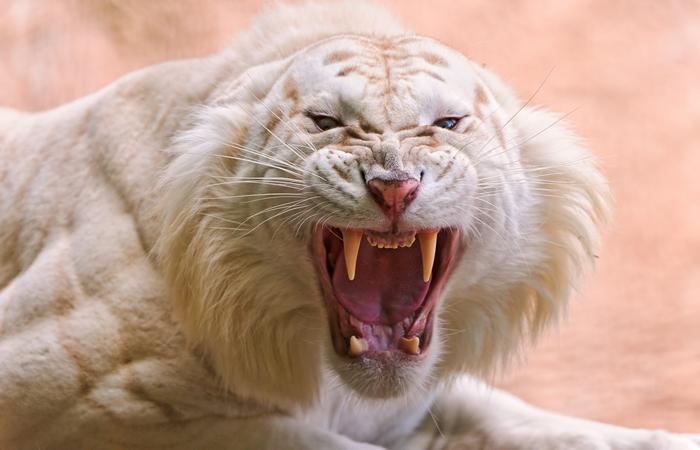 Альбинизм встречается и у животных.
