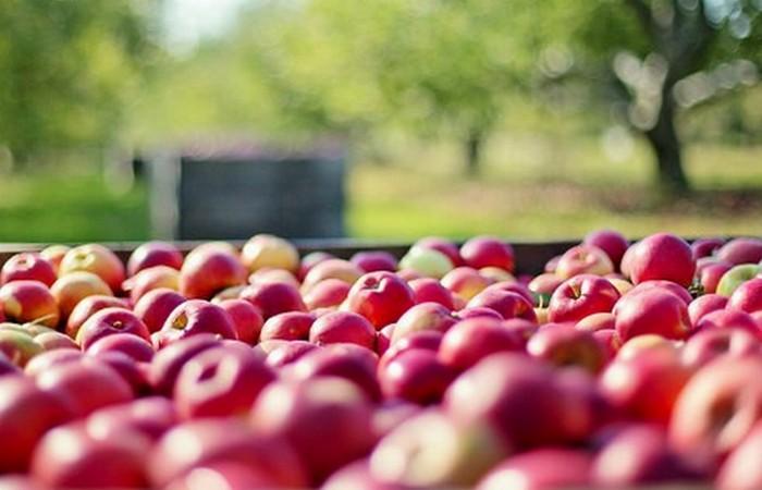Аллерген: яблоки.