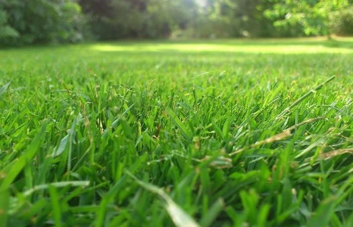 Аллерген: пыльца трав.