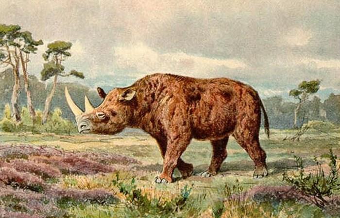 Останки шерстистого носорога.