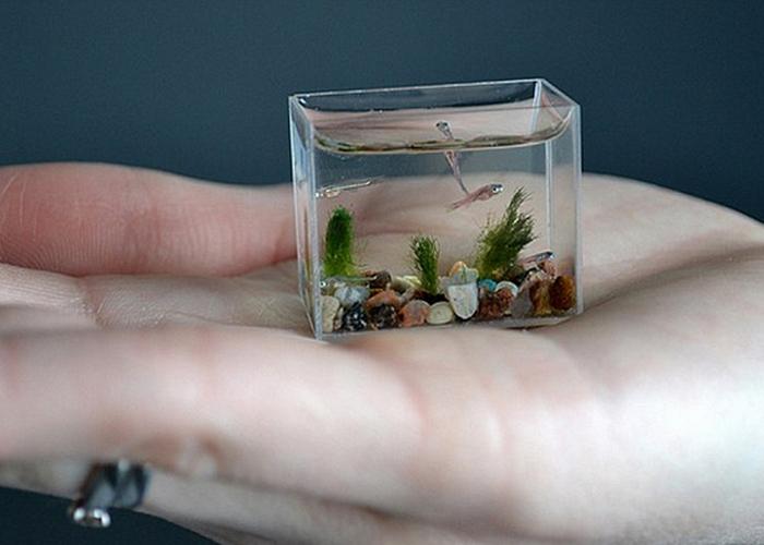 Самый маленький аквариум в мире.