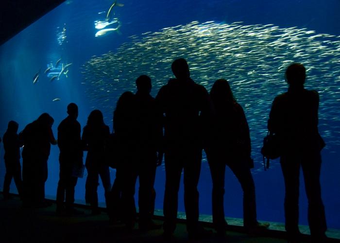 Аквариум «Monterey Bay».