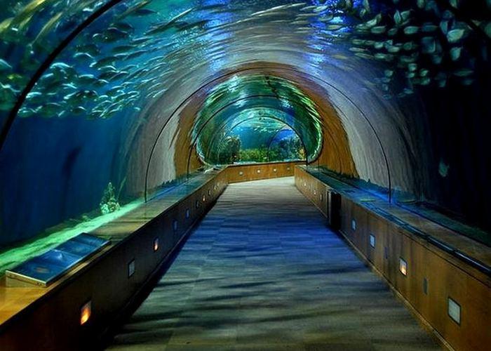 Аквариум «L'Oceano».