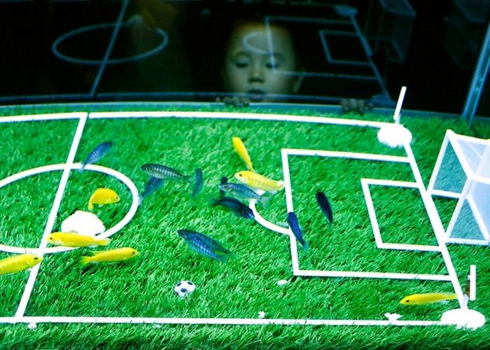 Рыбки играют в футбол.