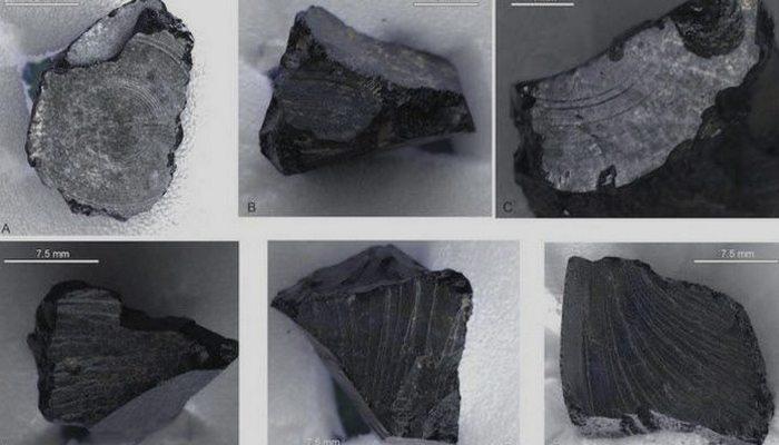 Древний артефакт: смола в могильнике.