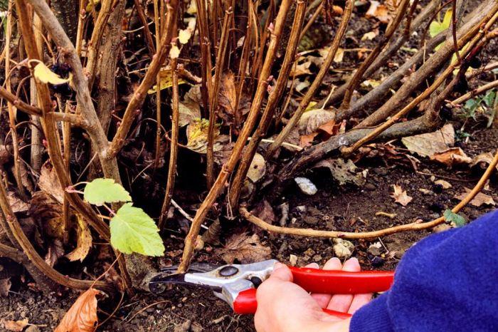 Делаем обрезку после уборки. |Фото: fb.ru.