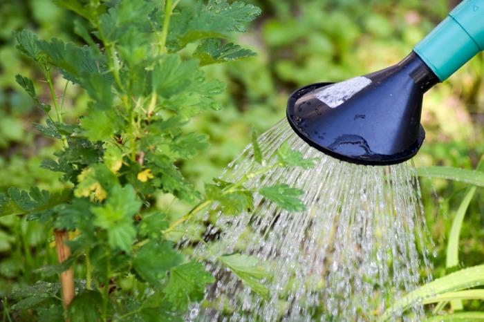 Незабываем поливать. |Фото: pixabay.com.