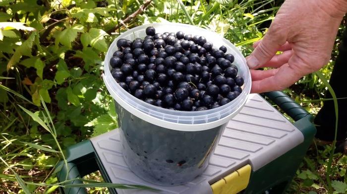 Чтобы был добрый урожай. ¦Фото: youtube.com.