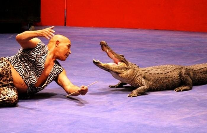 Профессиональный дрессировщик крокодилов.