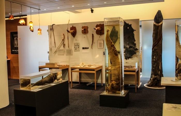 Исландский музей фаллологии в Рейкьявике.