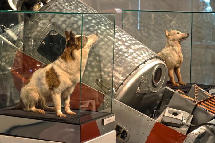 После смерти их чучела выставили в музее. |Фото: yandex.com.