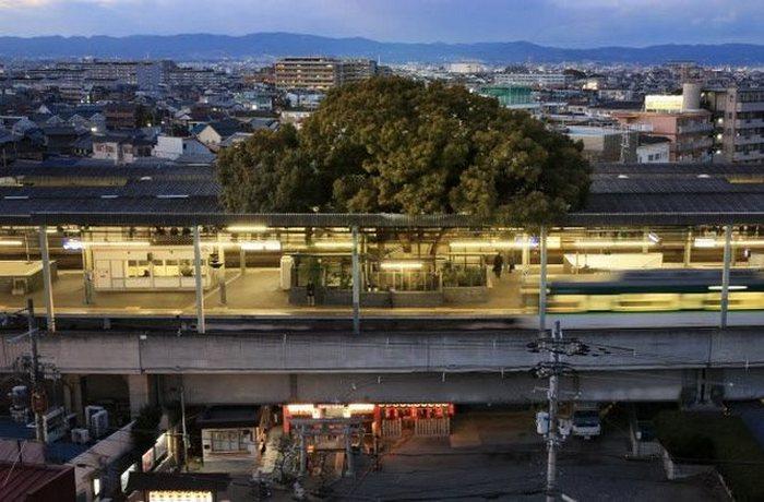 Железнодорожный вокзал, построенный вокруг 700-летнего дерева.