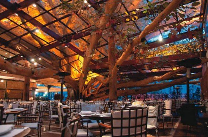 Ресторан, построный вокруг 100-летней смоковницы.