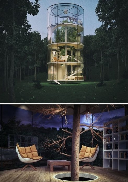 Стеклянный дом, построенный вокруг целого дерева.