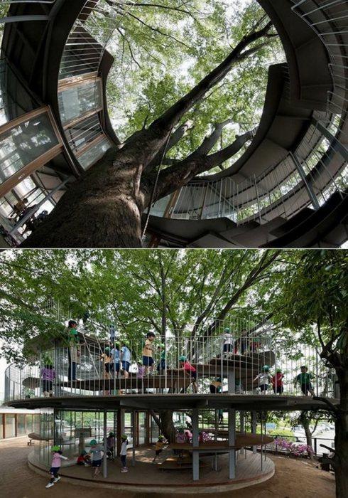 Детский сад, построенный вокруг исторического дерева.