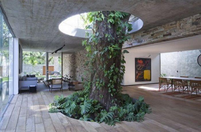 Дом, построенный вокруг нескольких деревьев.