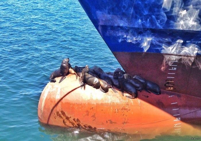 Иногда на них залезают морские котики. |Фото: pikabu.ru.
