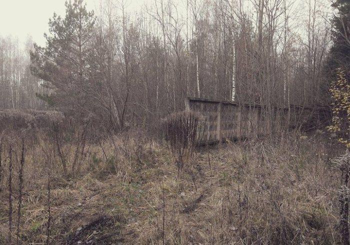 Спрятан в лесу.