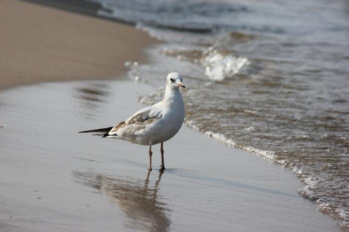 Чайки весьма умны. |Фото: nastol.com.ua.