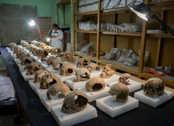 Найдено огромное количество черепов.