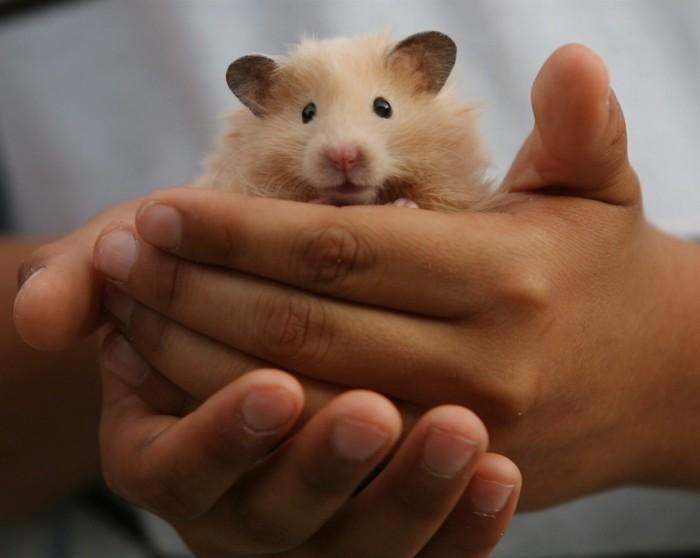 Даже вот таких малышей-милышей. |Фото: 680news.com.