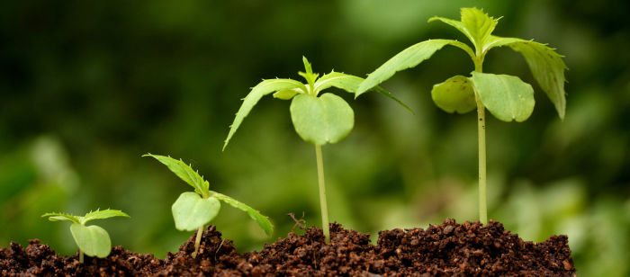 Поможет развитию аграрного сектора Китая. ¦Фото: veselyi-yrozhainik.ru.