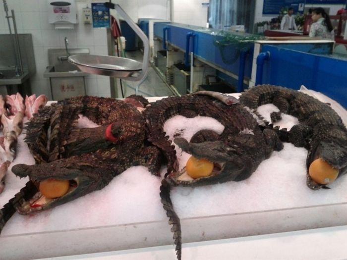 Замороженные крокодилы.