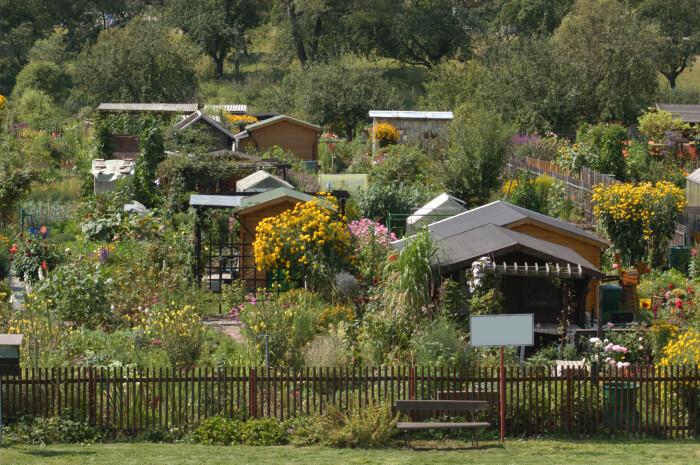 Немцы тоже любят огороды. |Фото: zielonyogrodek.pl.